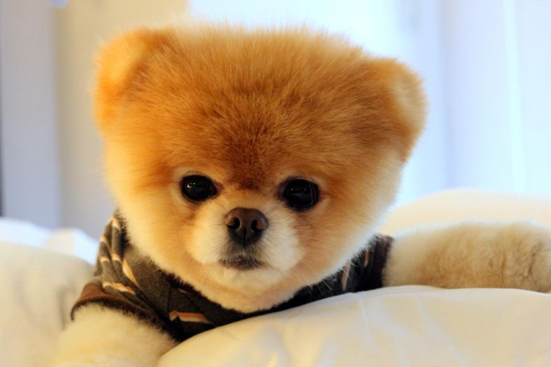 This Cute Pooch Probably Earns More than You